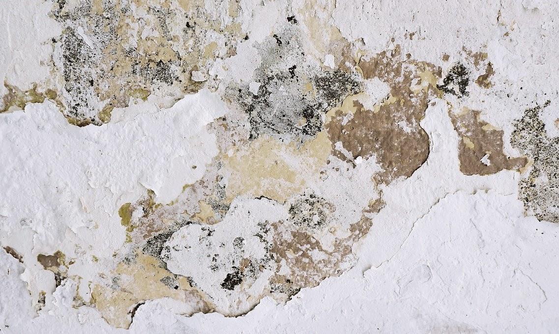 Curățarea mucegaiului: cum scapi de petele din baie și din casă